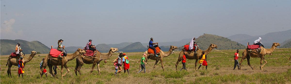 Bobong Camels