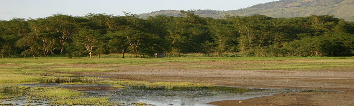 Acacia Forest