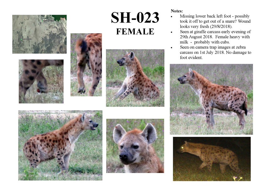 Hyena Identification