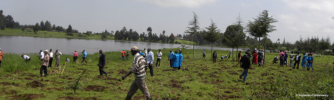 Tree planting near the dam