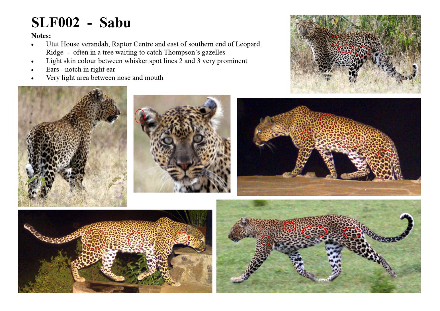 Sabu – SLF002